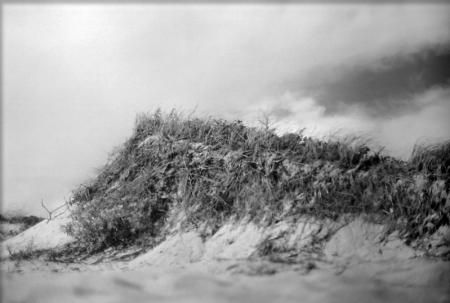 black and white photo of a beach dune with grasses